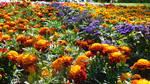 Flowerpower (7) by drackendarck