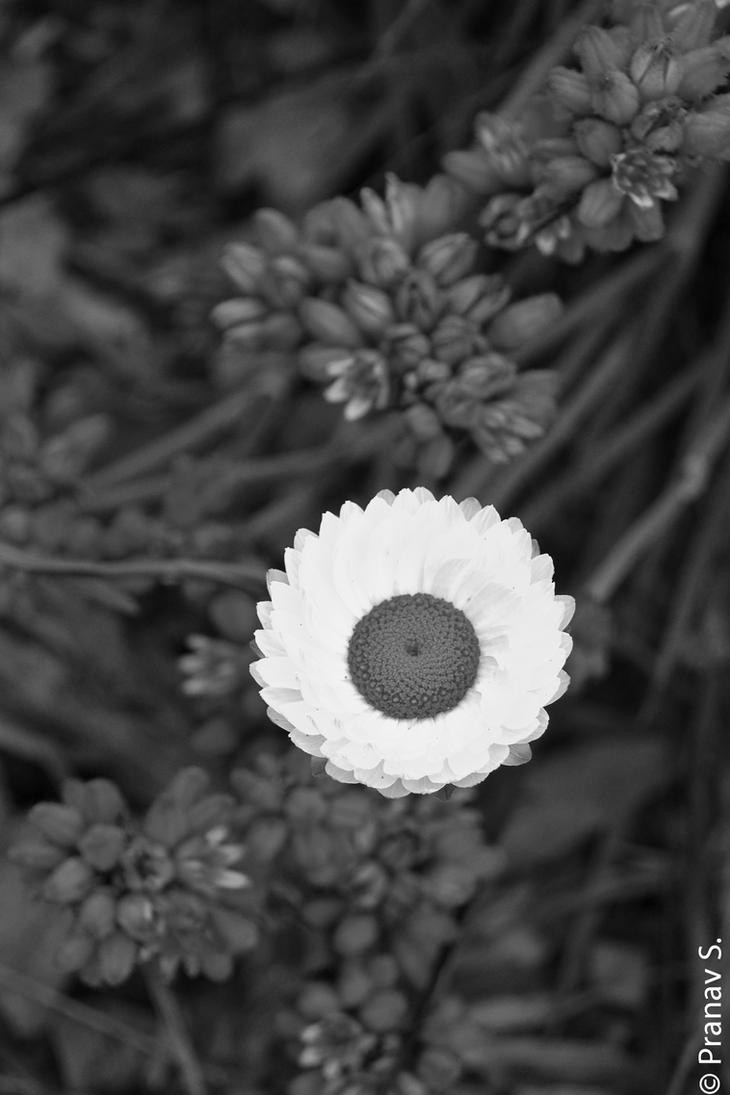 Black and White by pranav03