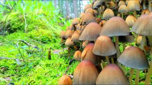 Kleine Piltze Little Fungi