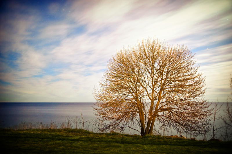 tree along lake michigan by foryoutoknowtice