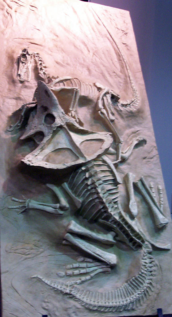 Velociraptor and Protoceratops by Mountaineer47