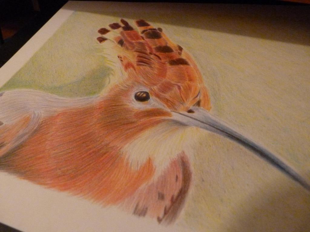piu piu birds by NikolaiSirone
