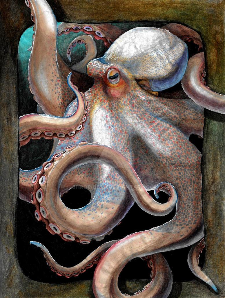 Octopus by Shroe-desu