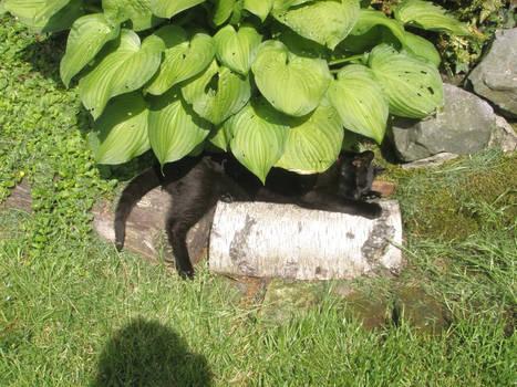 Melodramatic Cat