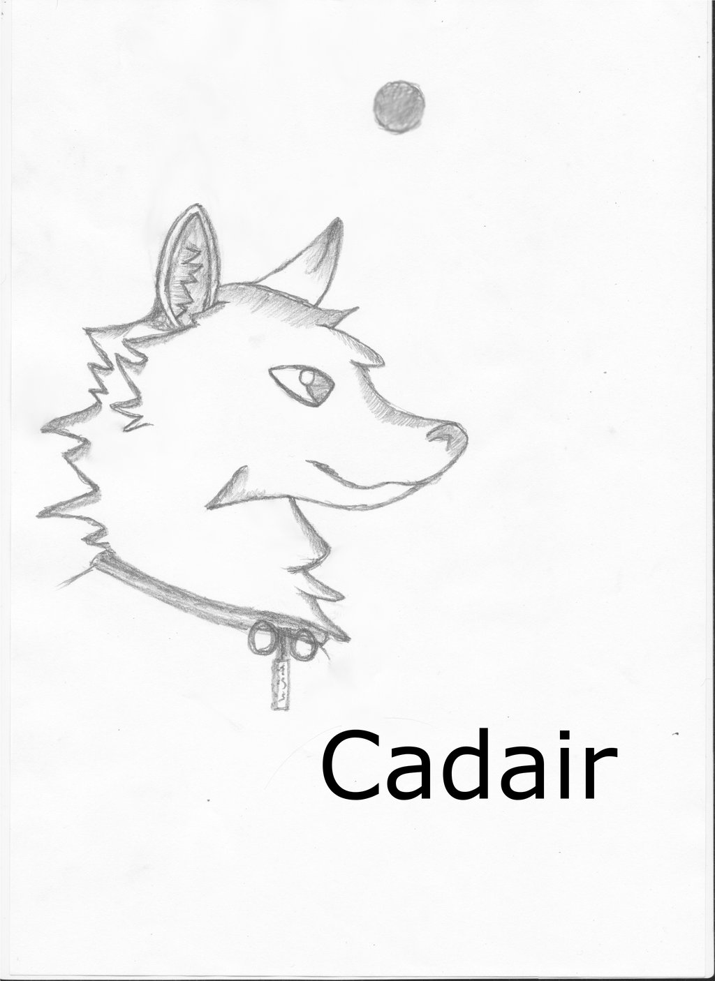 cadair's Profile Picture