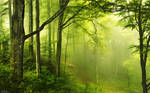 Green-Forest