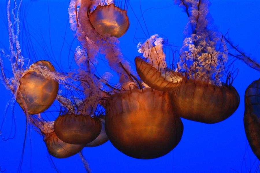 Sea Chandeliers by ghikij