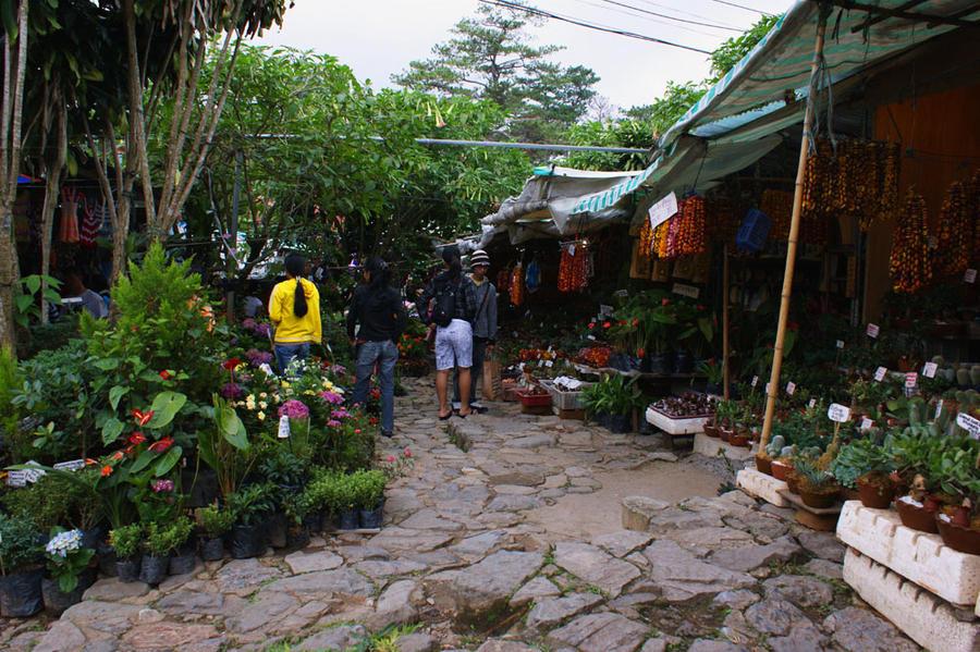 Minesview Market by ghikij