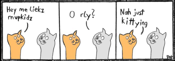 catty kits