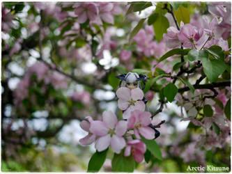 Flower Stare Shara by Eurosubstance
