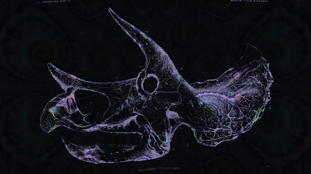 Triceratops Skull Fractal Wallpaper by saintabyssal ...