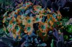 Neonic Spring II