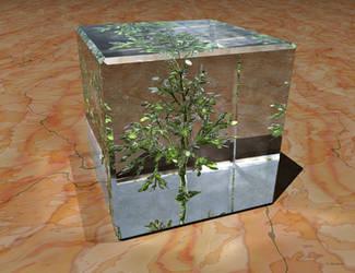 Tree in Cube by Antarasol