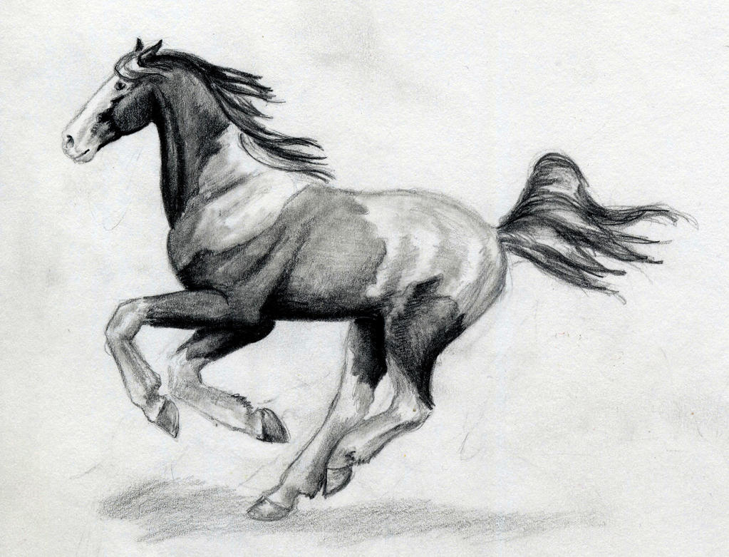 Running arabian horse drawing - photo#23