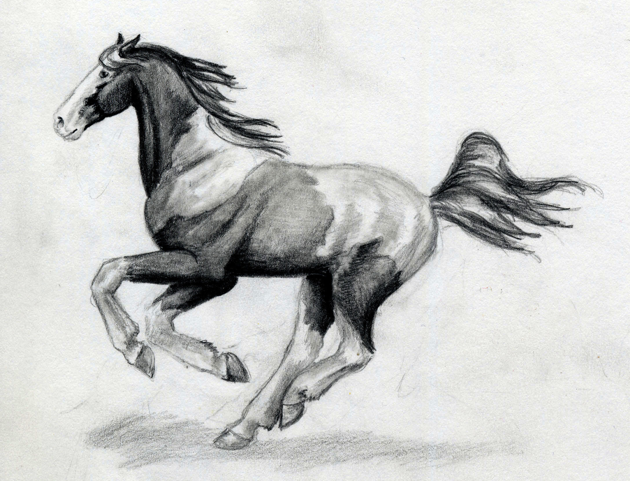 pianted horse running by SpottedPegasus on DeviantArt - photo#14