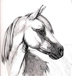 Grey horse portrit by SpottedPegasus