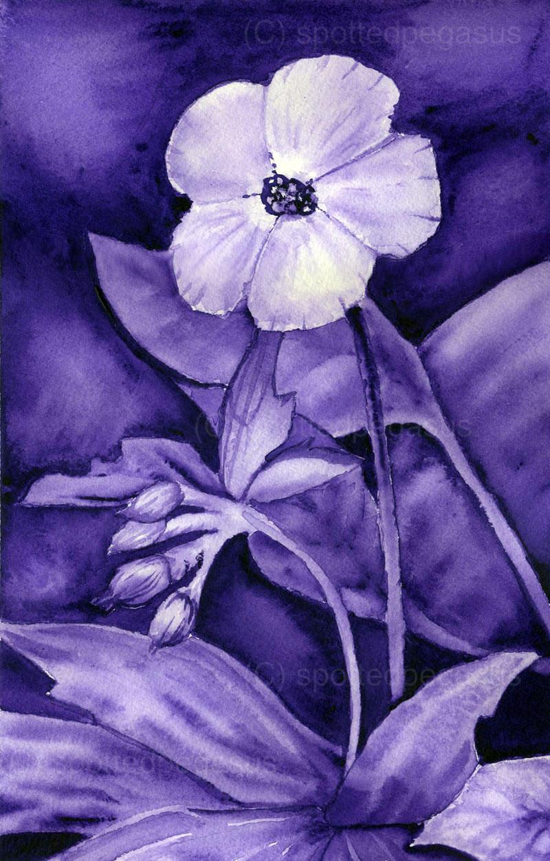 Monochromatic Flower by SpottedPegasus Monochromatic Flower by  SpottedPegasus