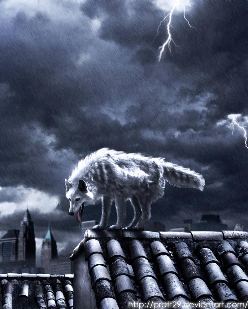 wolf in the dark city