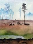 Sumava forest