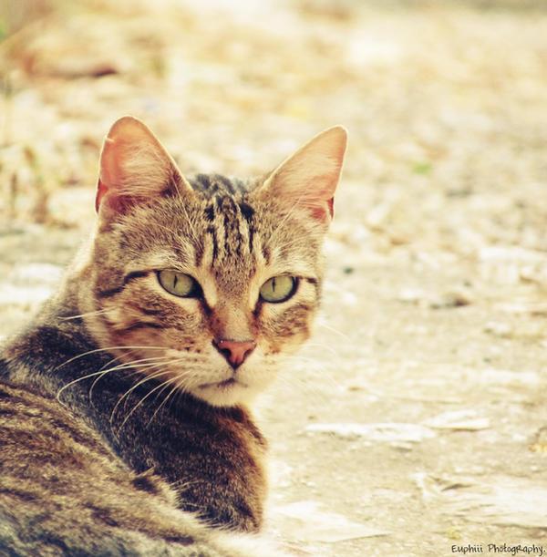 http://fc07.deviantart.net/fs70/i/2010/206/6/5/Cowboy_Cat__by_Euphiii.jpg