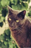 Portrait de Chat. by Euphiii
