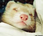 Pinky Nose