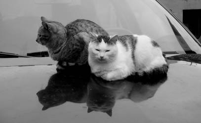 Just cats.