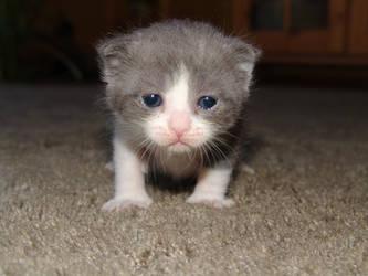 Dopey Baby Duma by CatStock