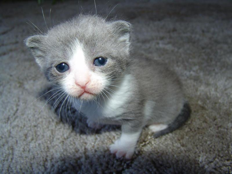 Sad Cat Face Re: sad cat diary Sad Cat Face