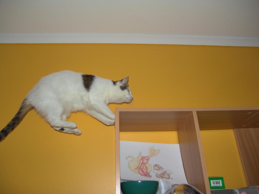 Leap 247 by CatStock