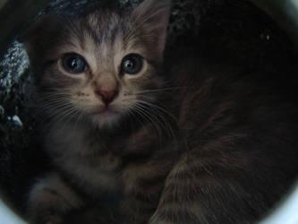 Sweet Sylvia by CatStock