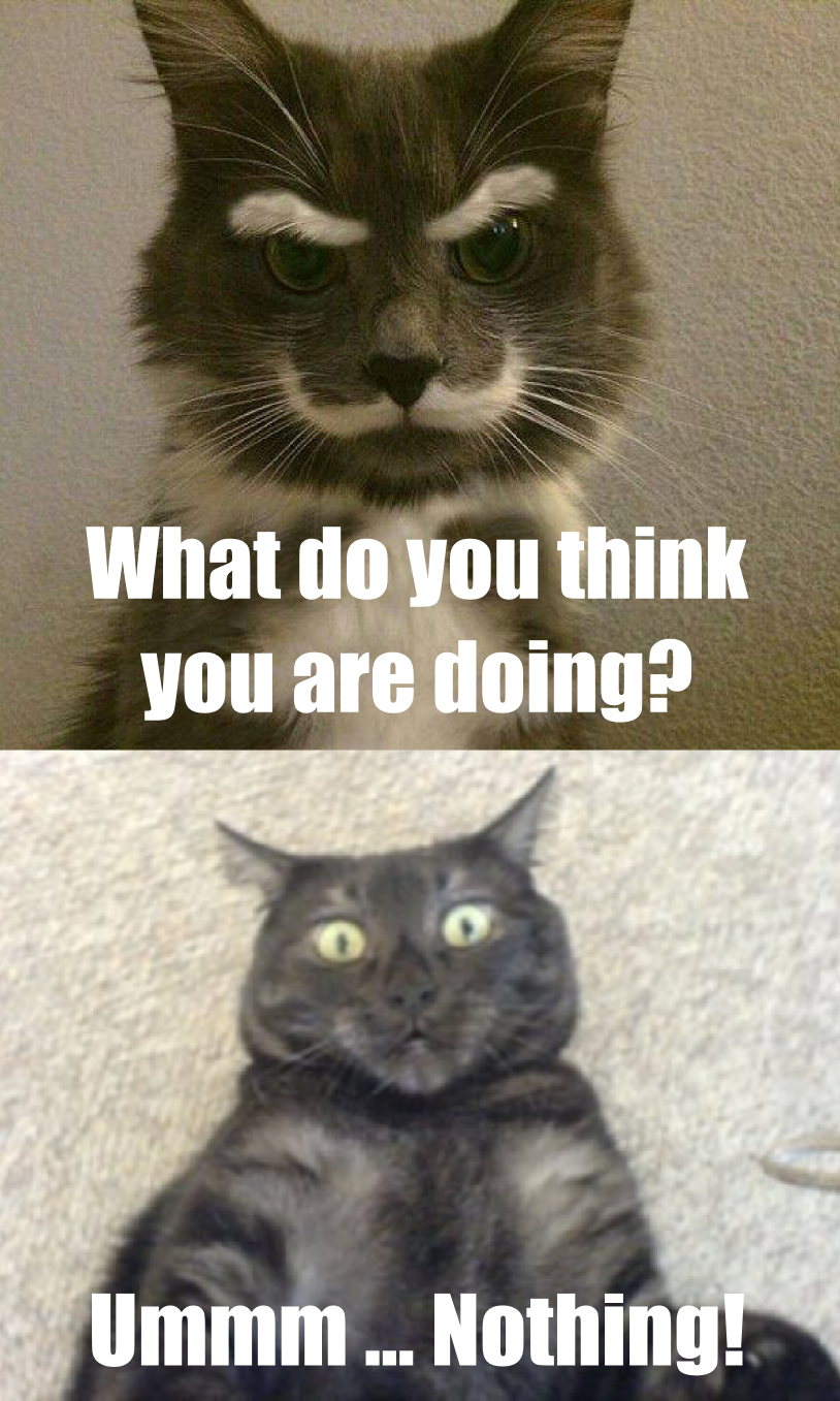 Meme: Skeptical Cat Vs Audrey by - 1148.7KB