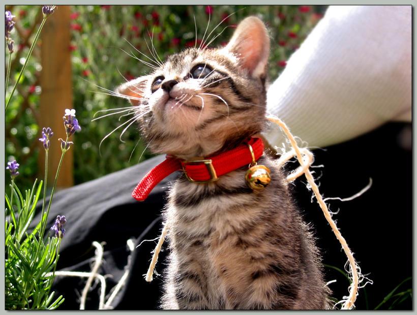 .Jojo creation 08. Kitten_by_Darkbluespace