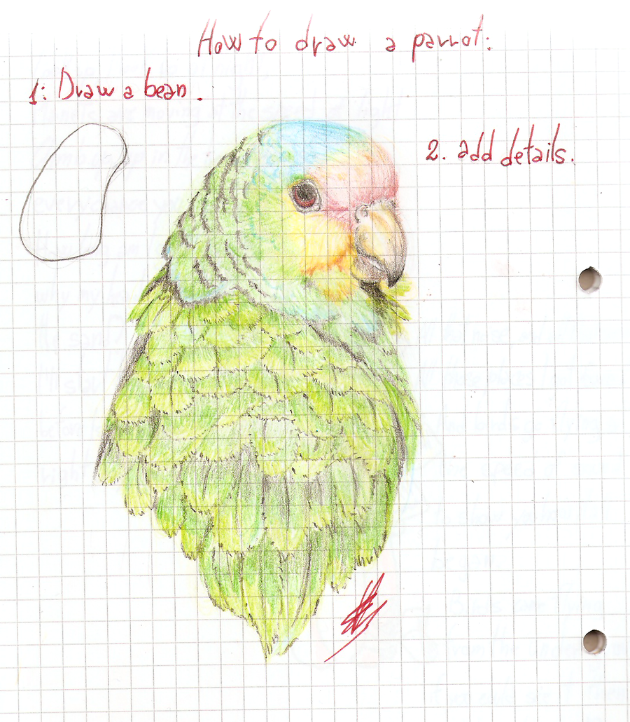 how to draw a parrot by sasokity on deviantart