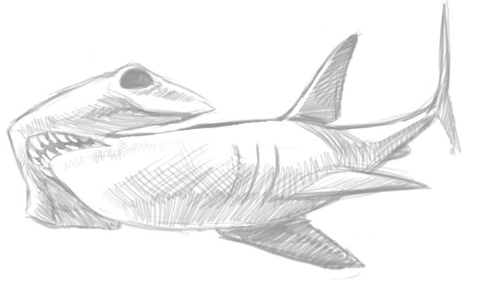Shark Week - Hammerhead Shark by anklesnsocks on DeviantArt