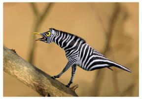 Zebra by marochromix
