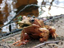 Frog by marochromix