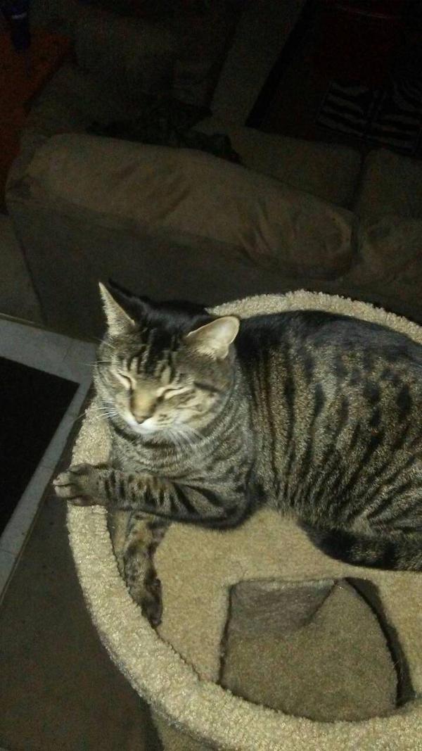 Stripe aka grumpy cat by Octaviamelodyscratch