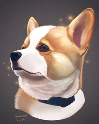Dog Today : Corgi