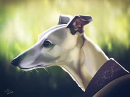 Dog Today : Grey hound