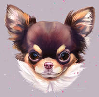 Dog Today : Chihuahua by YanisaXlll