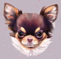 Dog Today : Chihuahua