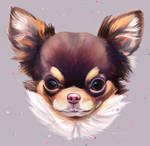 Dog Today : Chihuahua