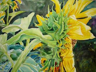 Sunflower 2 by p-e-a-k
