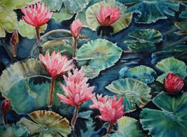 Waterlilies by p-e-a-k