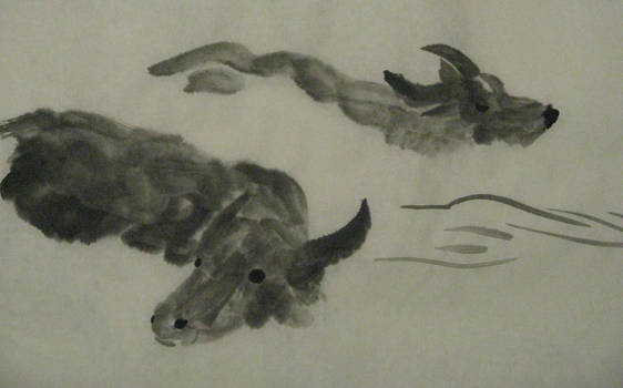 Swimming Oxen