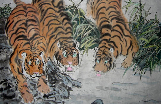 Tigers Near Water