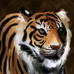 Tiger's Magesty