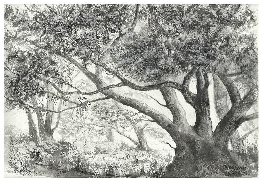 Forest Sketch by KanamaraMarsuri