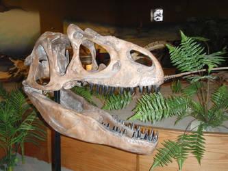Allo Skull by Ravensaurs-Rex